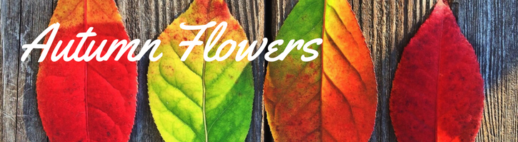 Autumn Flowers & Fall Flowers