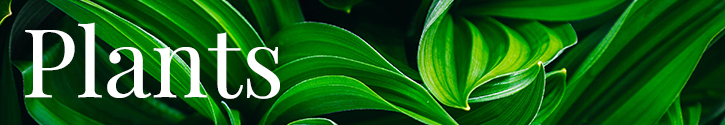 Green Plants, Blooming Plants & Orchids